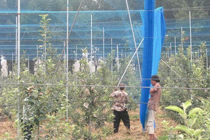 果木园防鸟网
