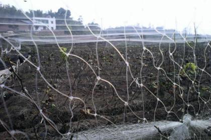 葡萄园防鸟网